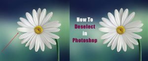 Feature Image_how to deselect